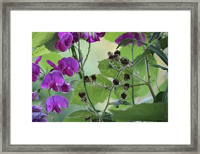 Unspoken Framed Print by Tim Rice