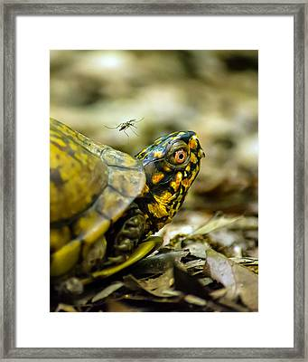 Unsuspecting Victim Framed Print by Jon Woodhams