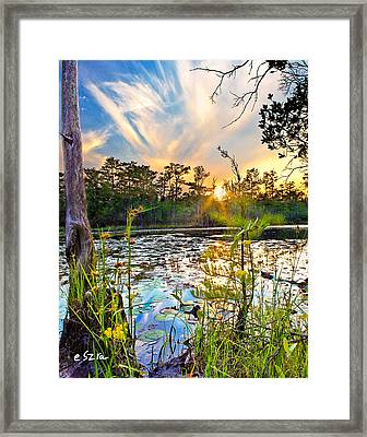 Yellow Wild Flowers Swamp Sunset Blue Sky Reflection Art Prints Framed Print
