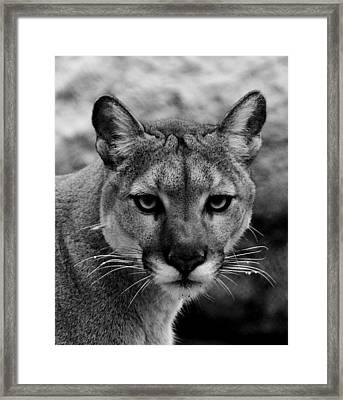 Untamed Framed Print