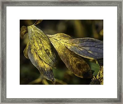 Until Spring Framed Print by Julie Palencia