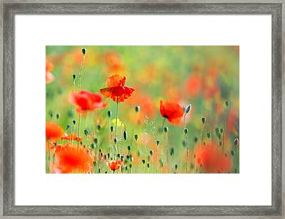 Untited Colours Of Summer  Framed Print by Roeselien Raimond
