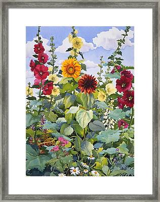 Hollyhocks And Sunflowers Framed Print by Christopher Ryland