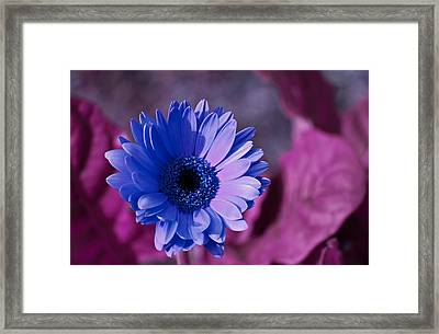 Framed Print featuring the photograph Untitled by David Stine