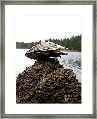 Untitled Framed Print by Devin  Cogger
