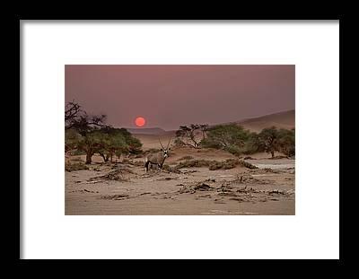 Ibex Framed Prints