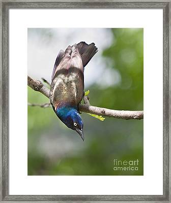 Framed Print featuring the photograph Untitled by Jan Piller