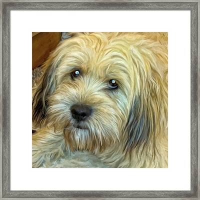 Chewy Framed Print by Michael Pickett