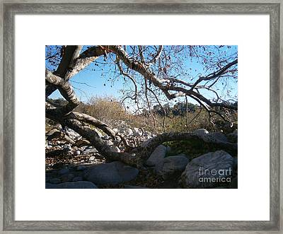 Untitled Photograph 2 Framed Print by Drew Shourd