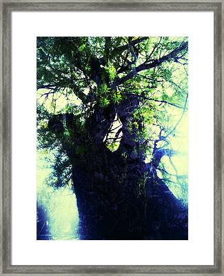 Untitled -tree Star Framed Print