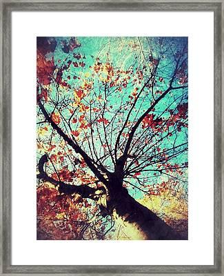 Untitled Tree Web Framed Print by Juliann Sweet