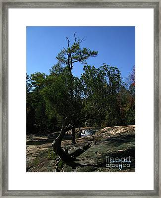 Framed Print featuring the photograph Unusual  by Donna Brown