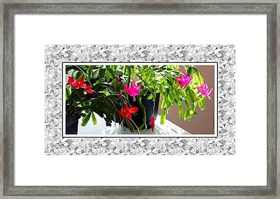 Unusual Simultaneous Bloomers 3 Framed Print by Barbara Griffin