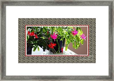 Unusual Simultaneous Bloomers 4 Framed Print by Barbara Griffin