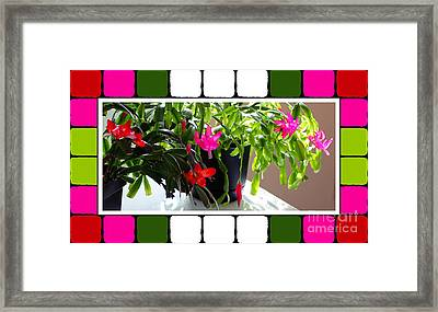 Unusual Simultaneous Bloomers 5 Framed Print by Barbara Griffin
