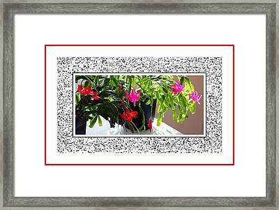 Unusual Simultaneous Bloomers Framed Print by Barbara Griffin