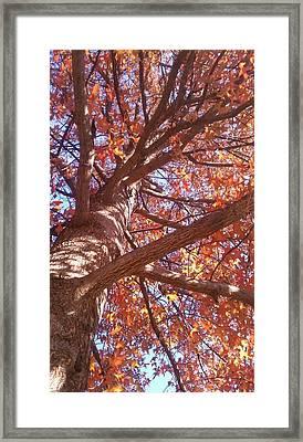 Up A Tree  Framed Print by Kiara Reynolds