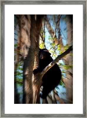 Up A Tree Framed Print by Valarie Davis