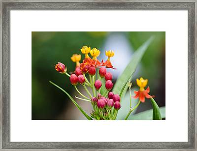 Up And Coming Framed Print by Christi Kraft