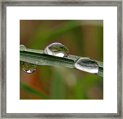 Up And Down Drops Framed Print