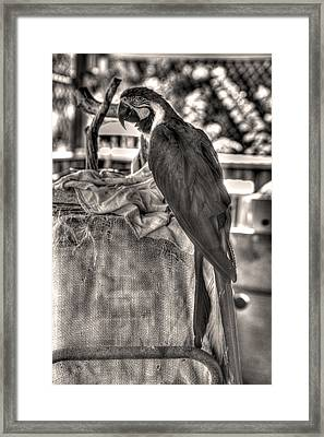Up At The Blue Parrot Framed Print by William Fields