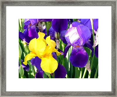 Up Close And Beautiful Framed Print by Will Borden