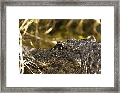 Up Close And Personal Framed Print by Frank Feliciano