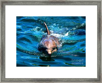 Framed Print featuring the photograph Up Close And Personal by Kristine Merc