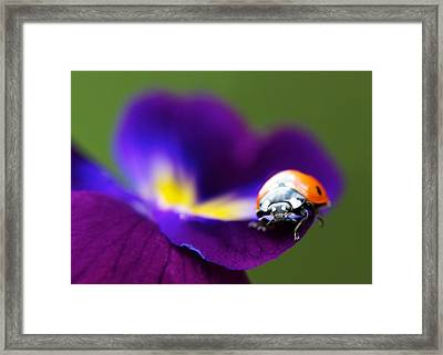 Up Close And Personal Framed Print by Lisa Knechtel