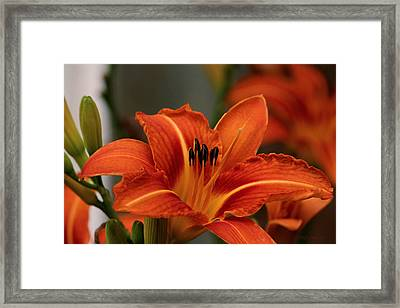 Up Close And Personal Two Framed Print
