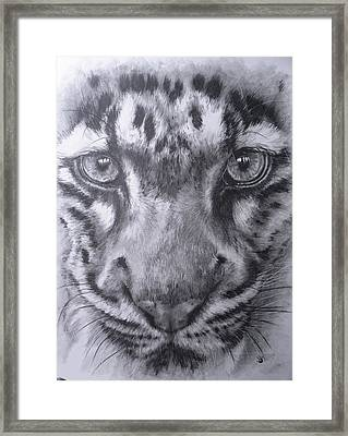 Up Close Clouded Leopard Framed Print by Barbara Keith