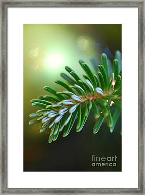 Up Close Evergreen Branch Framed Print by Birgit Tyrrell