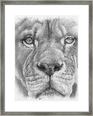 Up Close Lion Framed Print by Barbara Keith