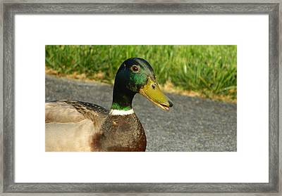 Up Duck And Personal Framed Print by David  Ortiz