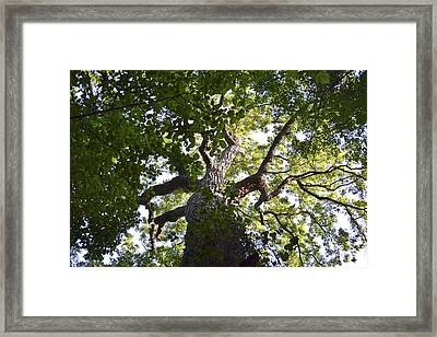 Up In The Trees Framed Print