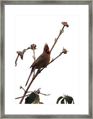 Up On The Treetops  Framed Print by Arielle Cunnea