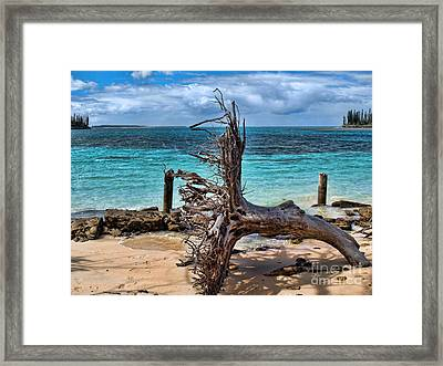 Framed Print featuring the photograph Up Rooted by Trena Mara