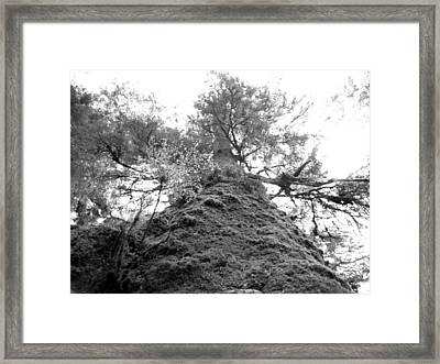 Framed Print featuring the photograph Up by Tarey Potter