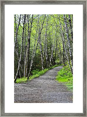 Framed Print featuring the photograph Up The Trail by Cathy Mahnke