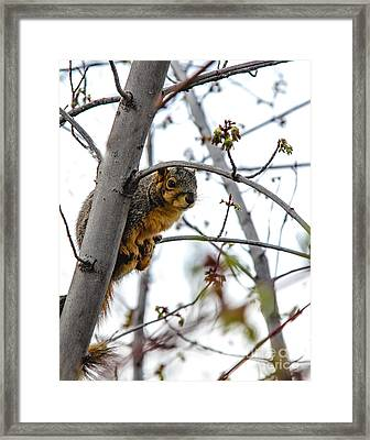 Up The Tree Framed Print by Robert Bales