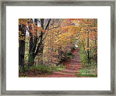 Up The Wooded Lane Framed Print
