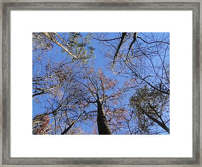 Up Through The Forest Framed Print by Cindy Croal
