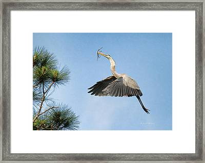 Up To The Nest Framed Print