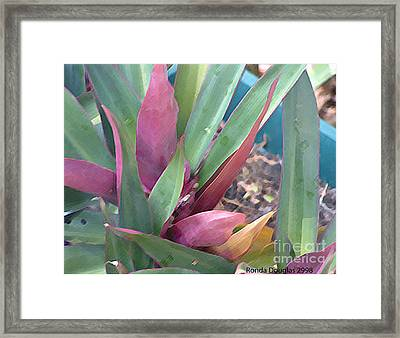 Upclose Begin Blossom Framed Print