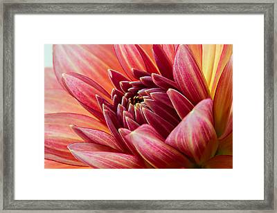 Uplifting 2 Framed Print by Mary Jo Allen