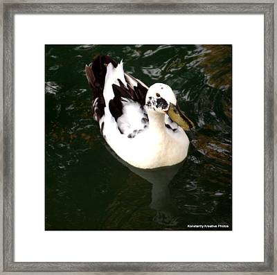 Upon Reflection Framed Print by Misty Herrick