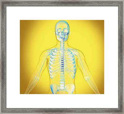 Upper Body Framed Print by Claus Lunau/science Photo Library