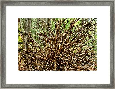Uprooted Framed Print by Adam Jewell