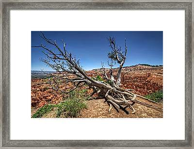 Uprooted - Bryce Canyon Framed Print by Tammy Wetzel