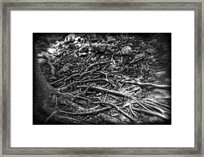 Uprooted Framed Print by Rhonda Barrett